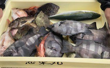 最盛期!ウタセ五目釣り入門:おいしい魚種多彩で楽し!【キホン解説】