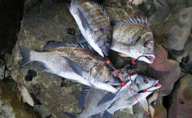 チヌが好む水深は?九州エリアの秋チヌを攻略!【長崎県・潮の浦港】