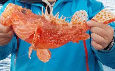 身がイセエビの魚!?タナ取りが重要!オニカサゴ釣りタックル~釣り方