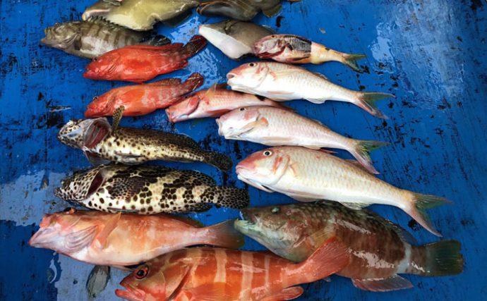 沖縄で人気上昇中!パワーひとつテンヤ釣り!【キホン解説&遠征釣行】