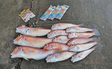 アマダイ釣るならこの日を選べ!天候と海況から検証!【中級者向け】