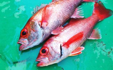 アカムツ釣り釣果を伸ばす3つのポイント タックルのキホン~釣り方