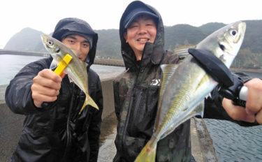 アジング&カマスゲーム爆釣 アジで海が真っ黒?【福岡県・宗像大島】