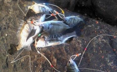 波止から狙う寒チヌフカセ釣り徹底解説 実釣で47cm本命【福岡県】