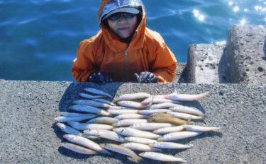 投釣りで冬ギス25cm頭に43尾 3〜4色が吉【千葉県・築港堤防】