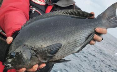 沖磯フカセ釣りでクロ52cm! 40cm超え連発【長崎県・上五島】