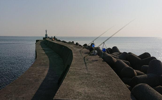 波止から投釣りで37cm花見カレイ シーズンイン【兵庫・仮屋漁港】