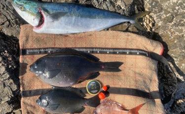 幻の沖磯でフカセ釣り ワラサと46.5cmグレ【三重県・白浦磯】