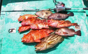 ハタ狙いの活きイワシ泳がせ釣りのキホン解説 タックルから釣り方まで