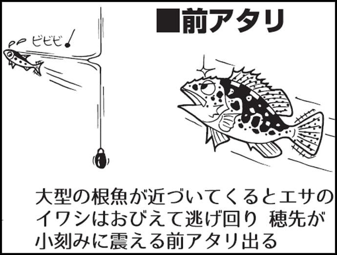 釣り イワシ 泳がせ