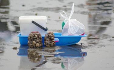 潮干狩りでアサリを見つける極意 海底変化とアサリの目に注目せよ!