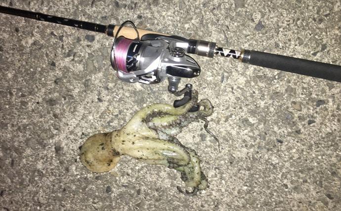 釣り場でのスピニングリールの置き方を紹介 実は釣果にも影響!