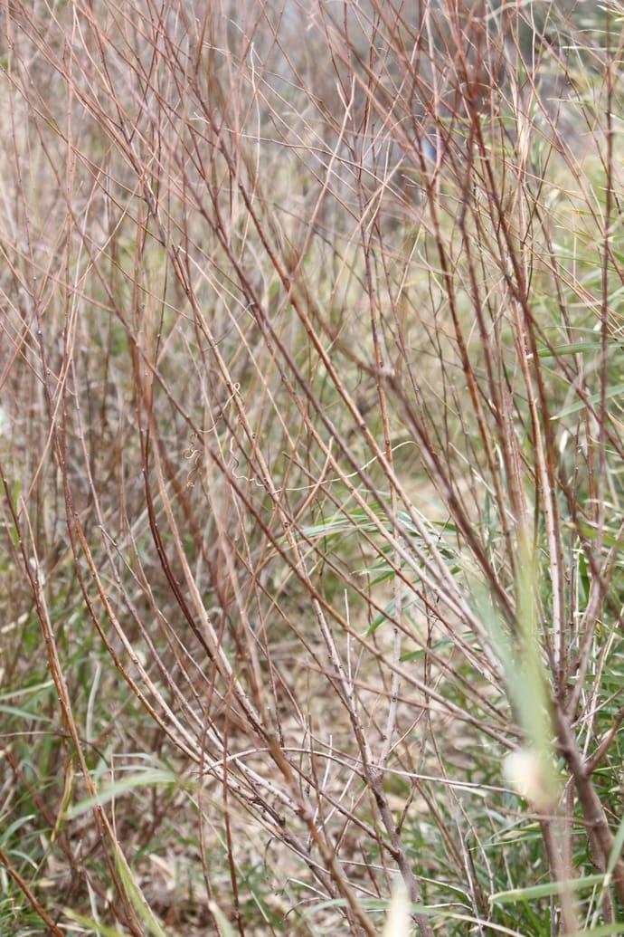 陸っぱりアングラー御用達『藪こぎ』のコツ ヤブ種類別に攻略法を公開