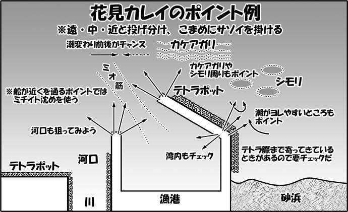 波止から狙う花見カレイ徹底解説  投釣りファンなら桜よりコレ!?