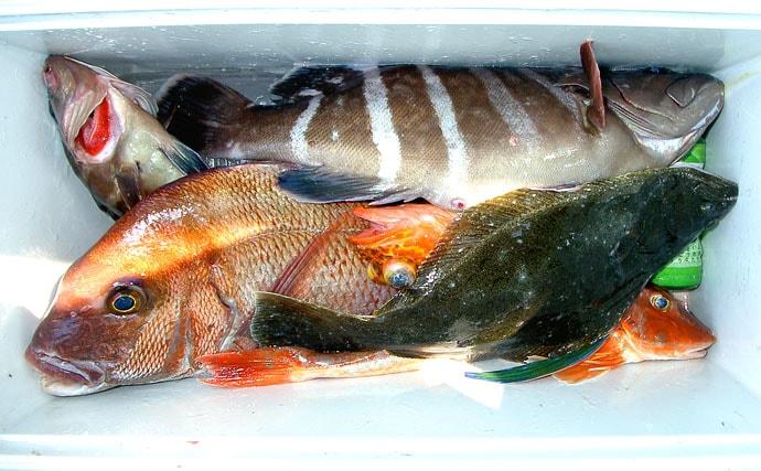 活イワシで根回り狙う高級根魚五目 豊富な魚種が魅力【千葉県・南房】