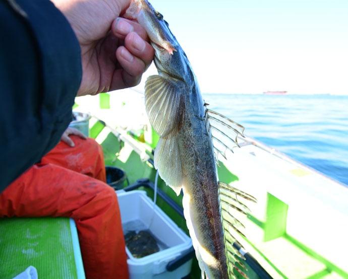 江戸前の伝統息づく『活きエサマゴチ釣り』初心者入門【東京湾】