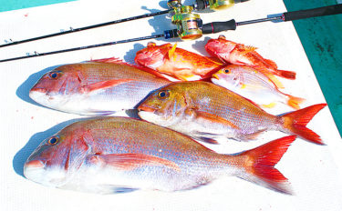 タイラバでマダイにスロージギングでワラサ&根魚【静岡県・御前崎沖】