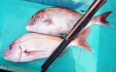 伝統釣法『シャクリマダイ』 リールを使わず真鯛を釣り上げる【内房】