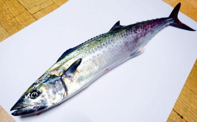 「春」の「魚」と書くサワラ(鰆)の旬は実は冬? 地域毎に違いも