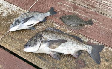 関西オススメ釣り場:じゃのひれ筏釣りセンター 良型チヌ&カレイの数釣り可能【兵庫・淡路島】