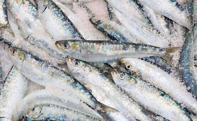 意外に簡単な美味しい『魚醤』の作り方 小魚釣れすぎた時にオススメ!