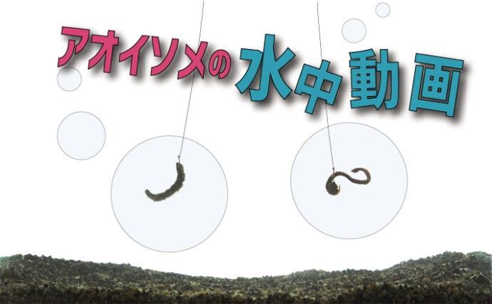 【動画あり】アオイソメの水中での動き方 ハリへの付け方で変化!