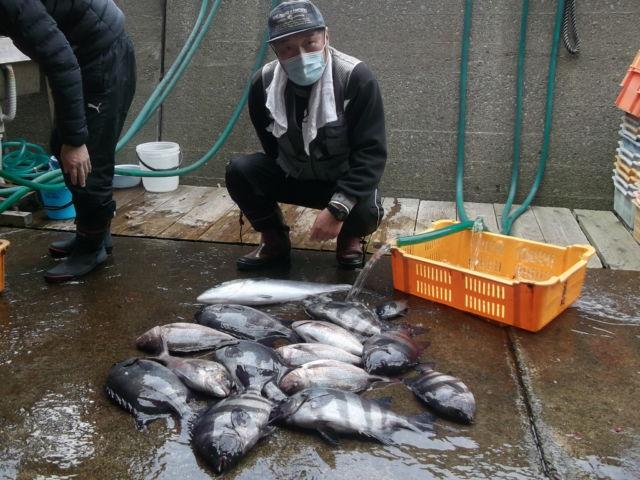 海上釣堀で天然物が釣れる? 初心者でも高級魚ゲット【三重・大和丸】