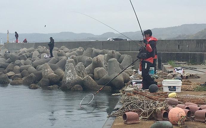 波止フカセ釣りで45cm頭にチヌ3尾の好釣果【兵庫県・育波漁港】