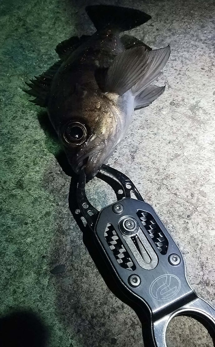パックロッドでお手軽波止ライトゲーム 根魚連発【兵庫県・林崎漁港】