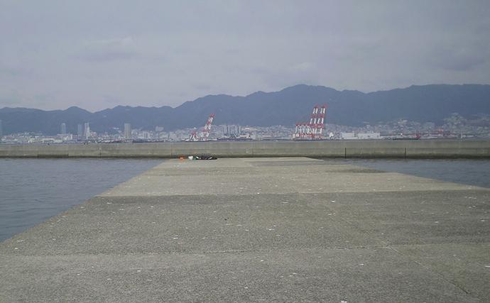 投げサビキはタナが命 大阪湾に中サバ回遊中!【兵庫県・第八防波堤】