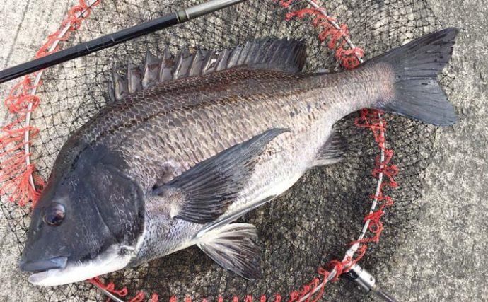 大阪湾チヌ落とし込み釣りのススメ 本格シーズンは『イガイ』が目安?