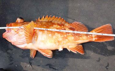 ディープタイラバで五目釣り 青物に根魚にアマダイも【京都・網野沖】