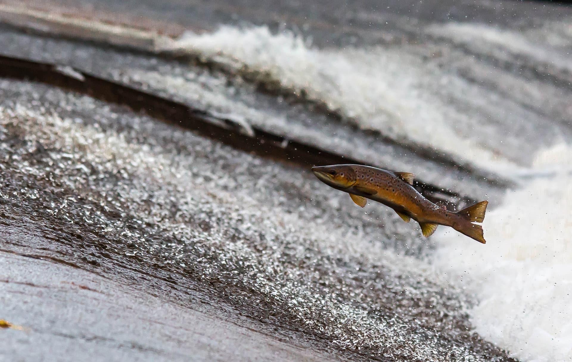 魚がジャンプする4つの理由を解説 もし人間が同じこと出来たら?