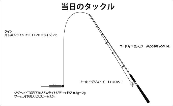 ジグ単メバリングで25cm級連発 時合いは突然に【淡路・仁頃漁港】