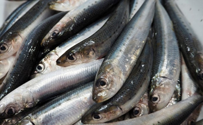 梅雨に旬を迎える魚3選 『梅雨の水を飲む』からとても美味しい?