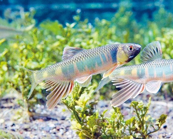 釣った魚で始めるアクアリウム 飼い易い魚種と必要な準備(第1回)
