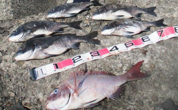 波止フカセ釣りで54cmマダイにチヌ5尾【鹿児島県・広瀬の堤防】
