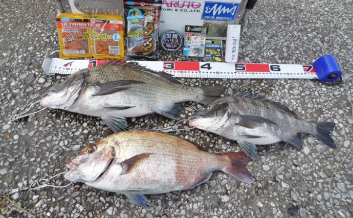 ダンゴ釣りで47cm頭にクロダイ2尾&マダイ43cm【愛知・篠島】