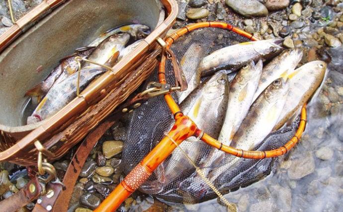 放流前日の渓流エサ釣りで良型アマゴ連発 川虫が正解【奈良・川原樋川】