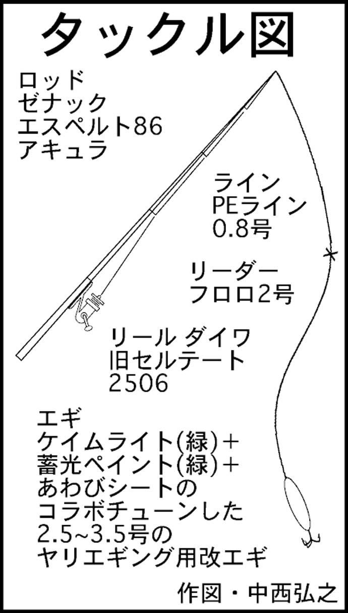 波止エギングでヤリイカ39杯 エサ巻きテーラーより好反応【福井県】