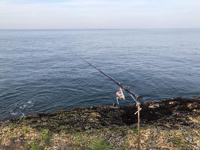 乗っ込みイシダイをフカセ釣りで狙う 釣り方&狙うポイント解説編