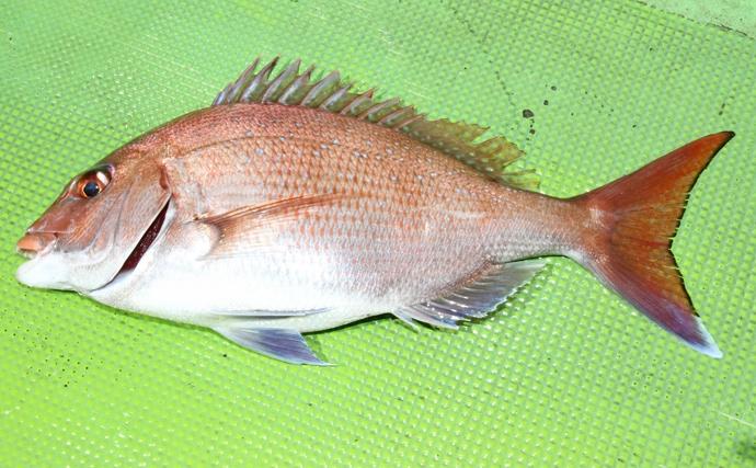 釣り人なら知ってるけど名前がちょっと残念な魚4選 当の魚に罪は無し