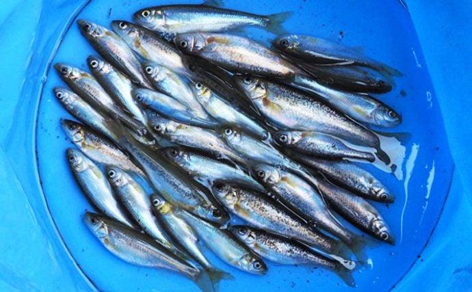都市の小河川での淡水小物釣り満喫 3目合計49尾【東京都・黒目川】
