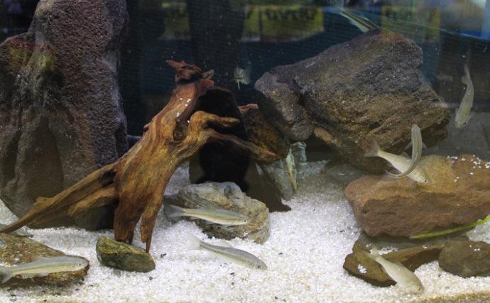 釣果で始めるアクアリウム 水槽内の住環境作り&飼育管理編(第4回)