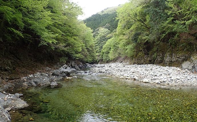 渓流ルアー釣りで朱点鮮やか23cm含みアマゴ5尾【奈良県・旭川】