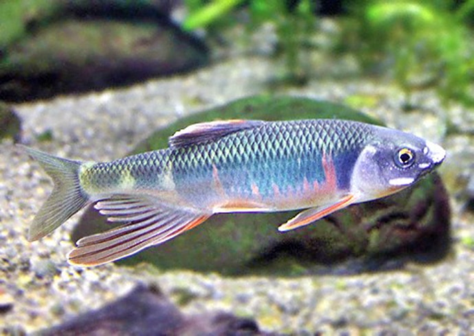 釣果で始めるアクアリウム オススメ対象魚3種と釣り方(第2回)