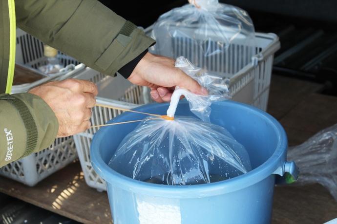 釣果で始めるアクアリウム トリートメントで病気を予防(第3回)