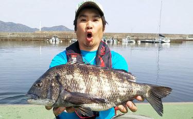カキイカダかかり釣りで45.5cmチヌ ひとつまみのオキアミがキモ