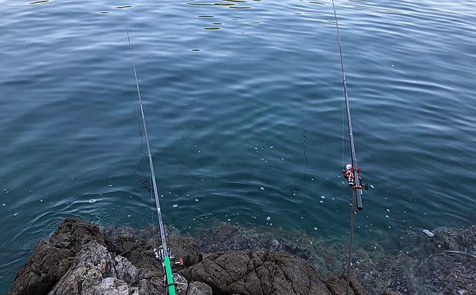 磯からのヤエン釣りで2kg級アオリイカ ドラグ音がバトル開始の合図