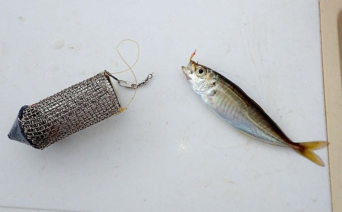 大阪湾の波止サビキ釣り解説 豆アジを1時間で100匹釣る方法!